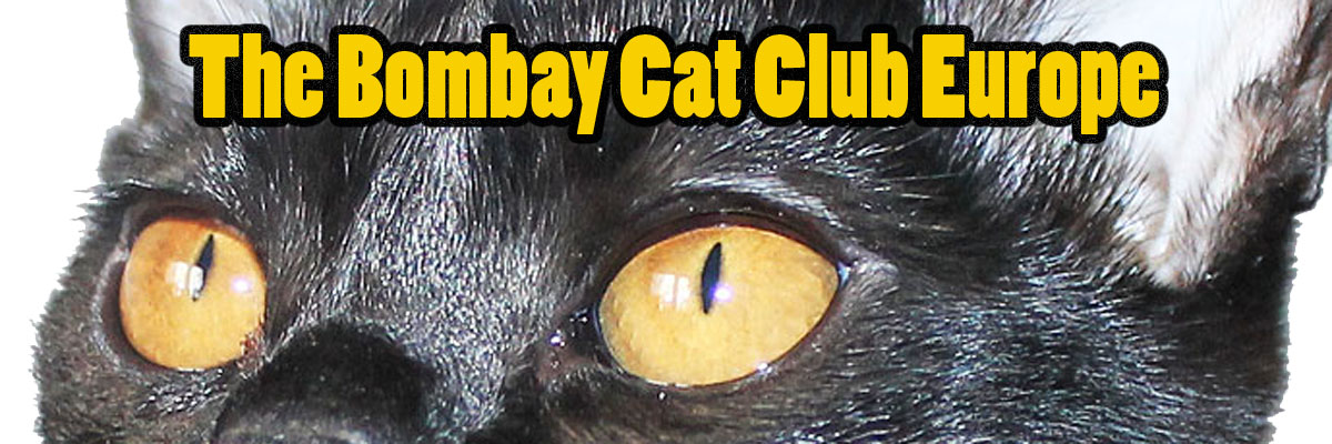 Bombay Cat Club Europe