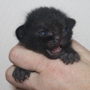 Lovestory's kitten